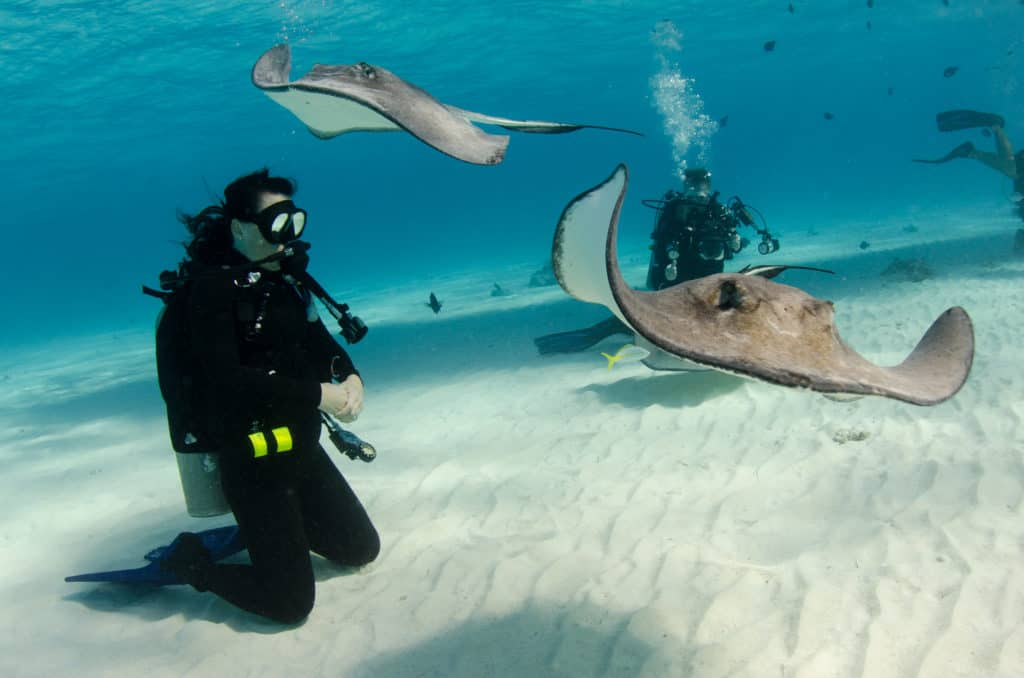 Scuba Diver and Southern Stingrays