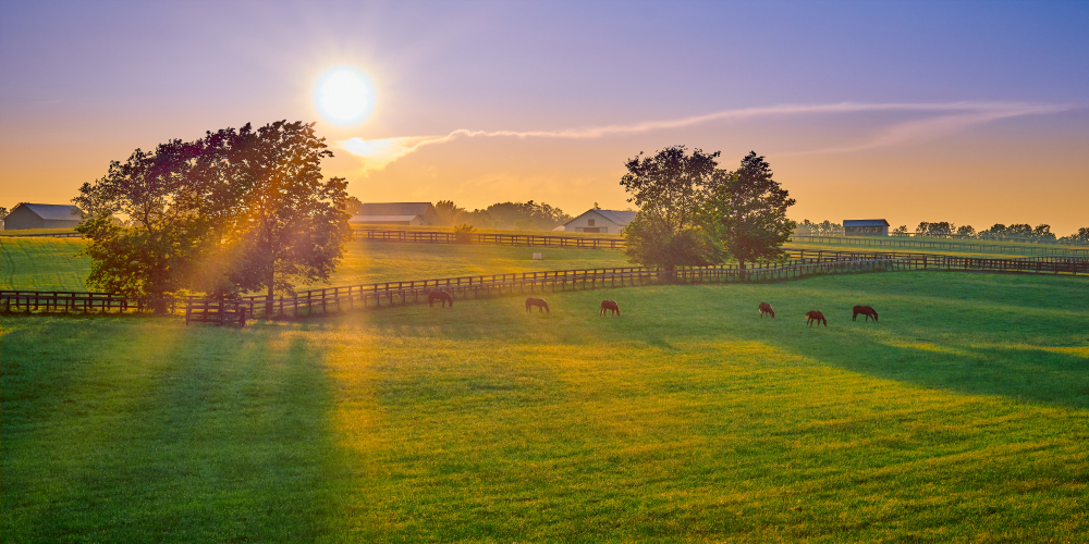 Thoroughbred horses grazing at sunset in a field
