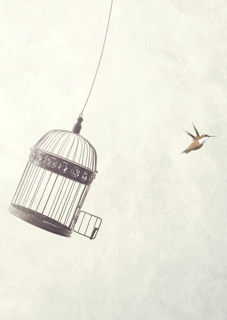 Bird escapes cage to freedom