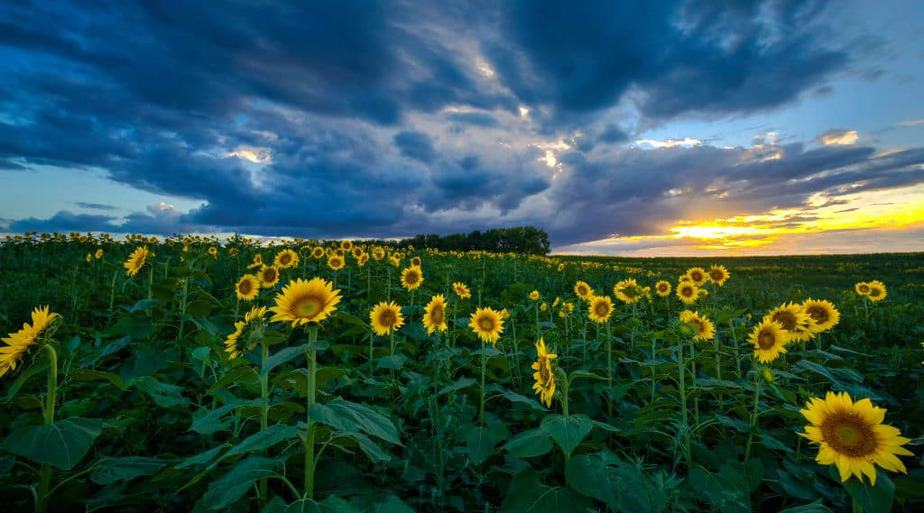 Sunflower farm, best off-the-beaten-path places to go