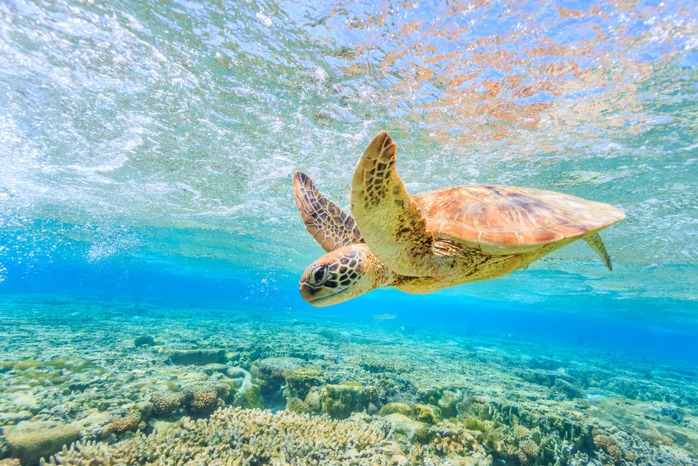turtle swimming in crystal clear waters